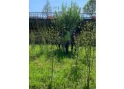 2021년 식목일 기념 광주천 무궁화 나무 가꾸기 활동