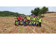 6월 9일 태안군지회 농촌일손돕기 마늘수확 봉사활동